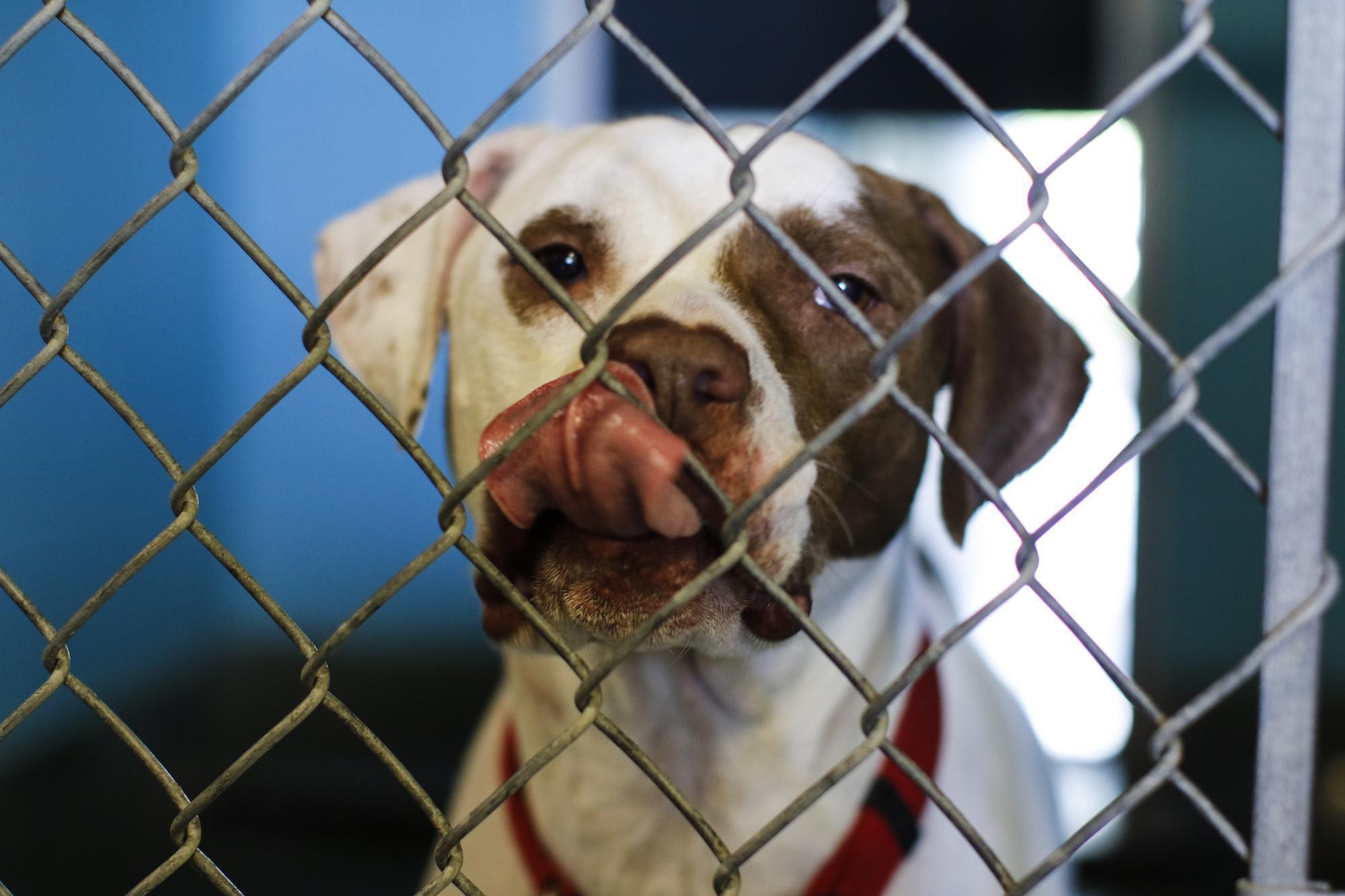 San Marcos Regional Animal Shelter seeks community help as it surpasses capacity