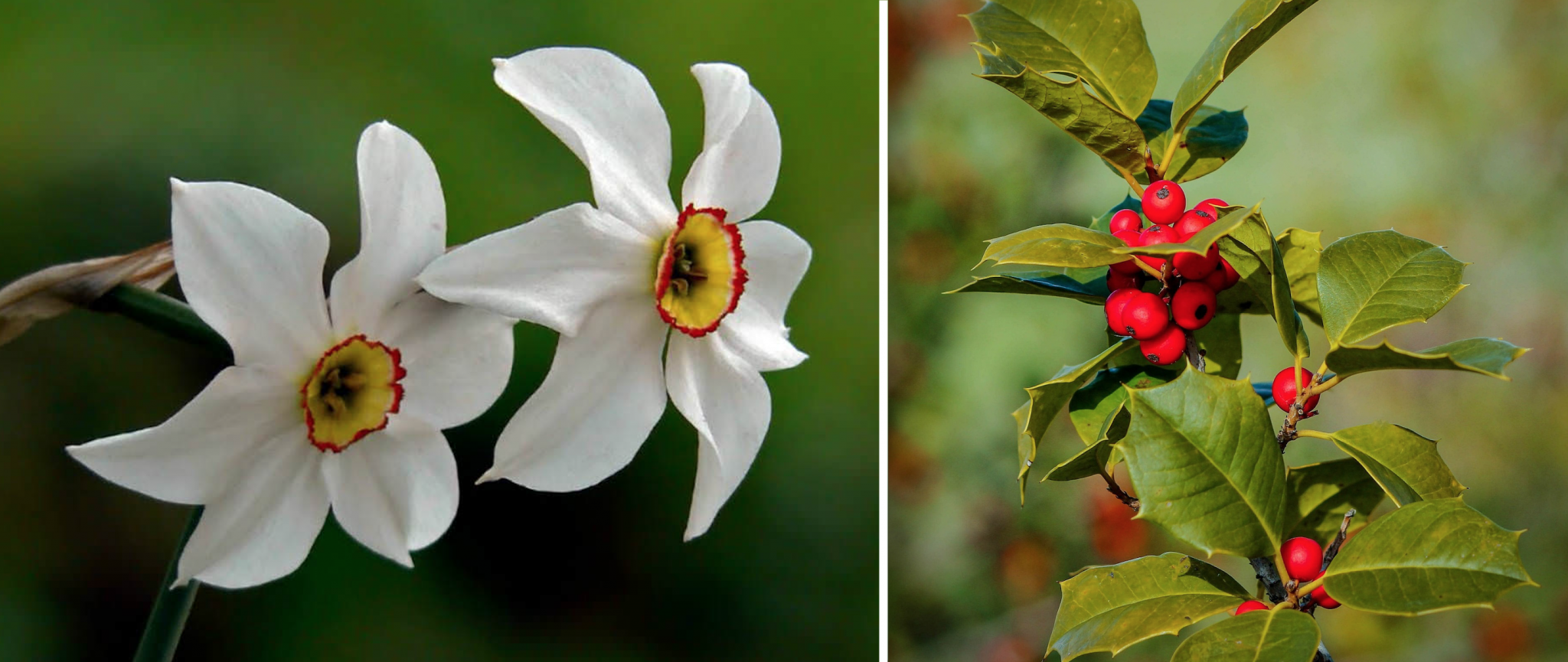 Growth In Gardening December Birth Flower San Marcos Record