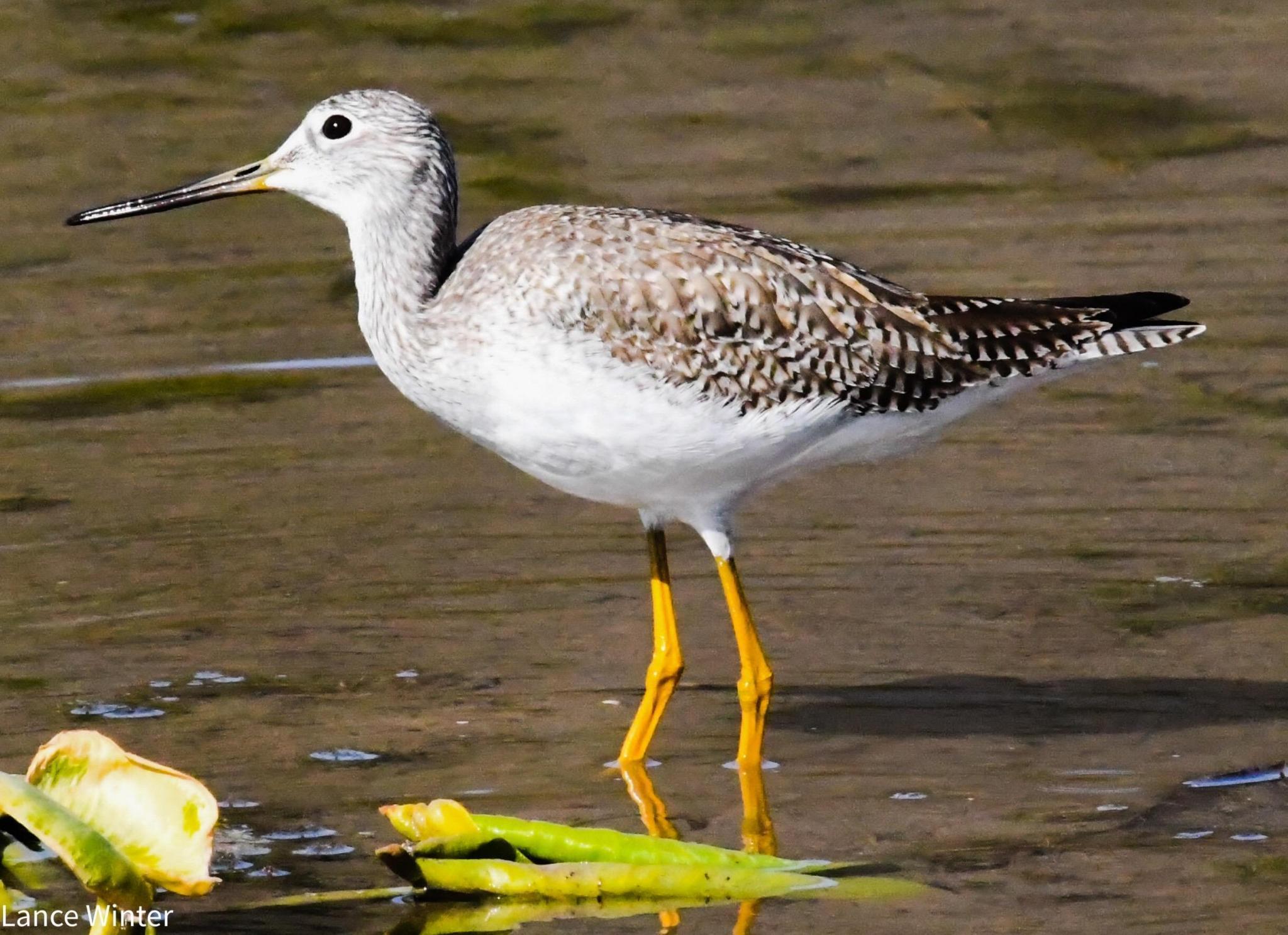 San Marcos, Spring Lake, wildlife, meadows center, birds, San Marcos News, San Marcos Record