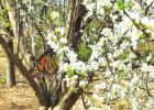 Spring Days Return