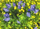 GoldDust your pathways to illuminate your garden