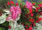 Time for some heart-to-heart for your artistic garden nature